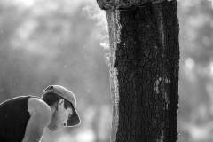 Oak vapor