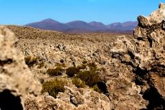 Bolivian deserts