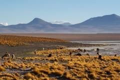 Bolivian altiplano landscape