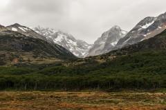 Ushuaia Woods