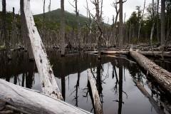 Woods of Ushuaia