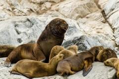 Patagonia - Sea Lions