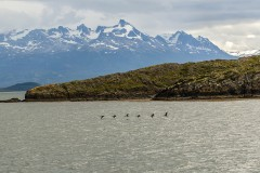 Patagonia - Beagle Channel